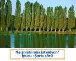resfebe_kavak