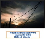 resfebe_kuş