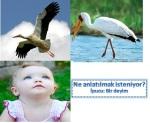 resfebe_leylek
